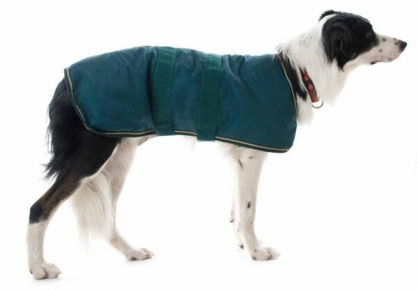 Luxury Waterproof Dog Coats
